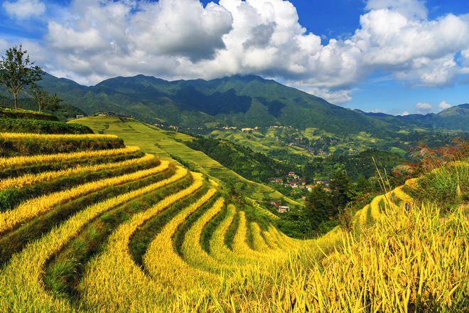Tour in Guangxi | Guilin Longji Rice Terraced Fields and Minority Villages Private Day Tour
